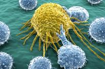 Здоровые клетки в борьбе с раковыми