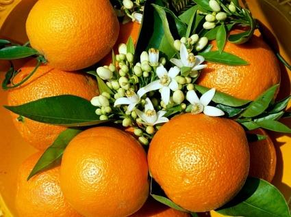 Апельсин - защита от рака
