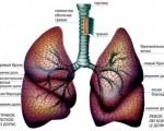 Рак правого и левого легких