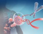 Ученые нашли способ лишить раковые клетки жизненной силы