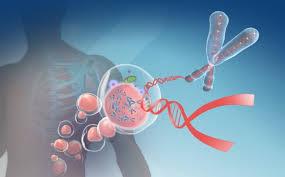 Типы немелкоклеточного рака