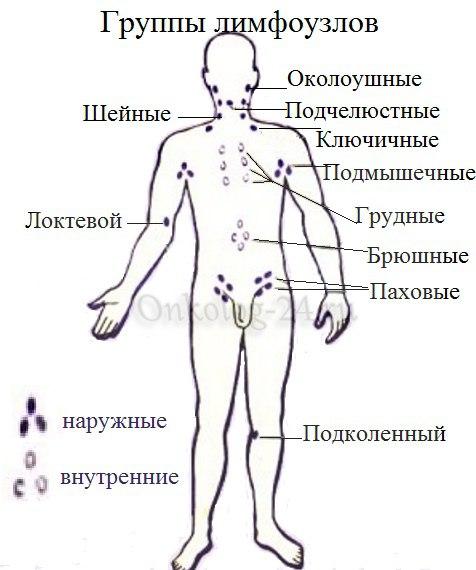 gruppy limfouzlov