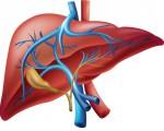 Холангиокарцинома или рак желчных протоков