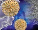 ВПЧ и рак шейки матки, их взаимосвязь
