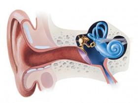 Рак уха: признаки