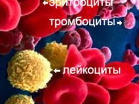 Рак крови: степени фото