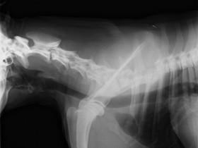 Рак костей: фото 1