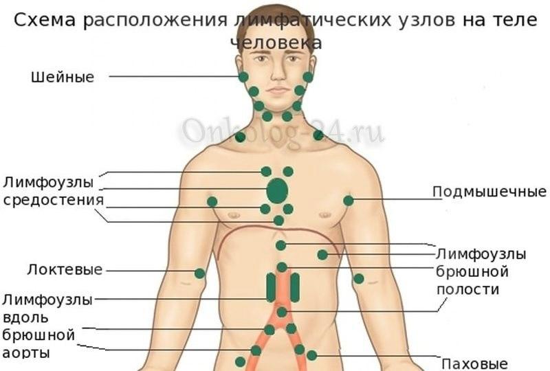 Raspolozheniye limfouzlov - foto