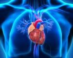 Рак сердца — как распознать и лечить болезнь?