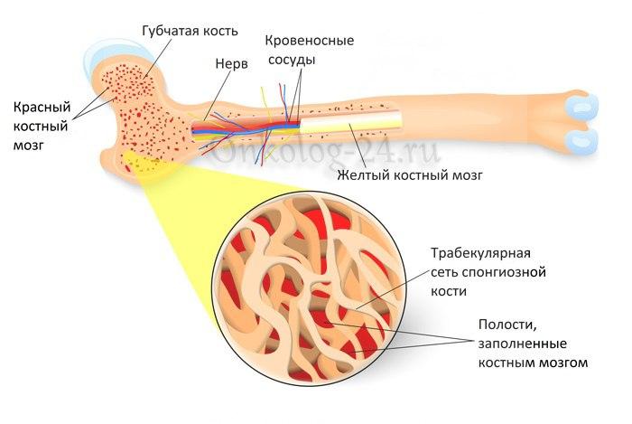 Stroyeniye kosti