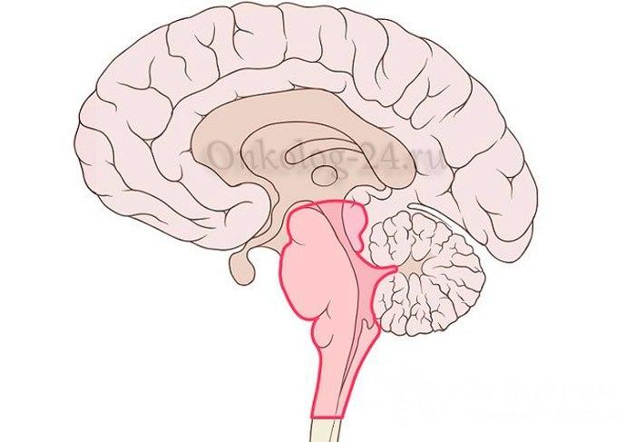 Opukhol stvola golovnogo mozga