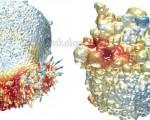Распад опухоли, что это такое, хорошо это или плохо, какой прогноз жизни при распаде опухоли?