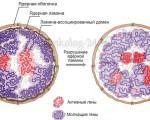 Как состарить раковые клетки для предотвращения развития метастазов?